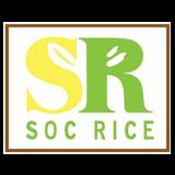 Gạo ST Sóc Trăng